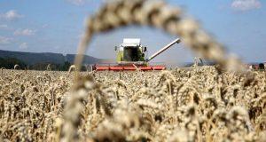 Αύξηση του παγκόσμιου δείκτη τιμών τροφίμων