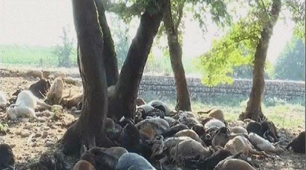 Διαχείριση νεκρών ζώων στην Περιφέρεια Δ.Ε.