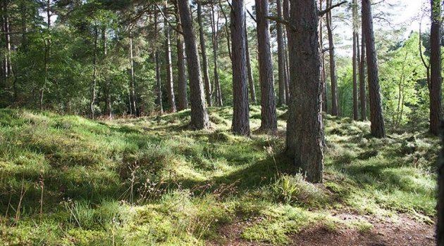Ολοκληρώθηκε η αναμόρφωση των δασικών χαρτών της Αποκεντρωμένης Διοίκησης