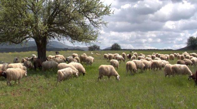 Π.Ε. Αιτ/νίας: Κατανομή βοσκοτόπων στους κτηνοτρόφους