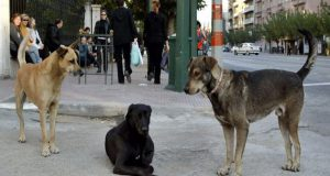 Πάτρα: Τρόμος από επίθεση αδέσποτων σκυλιών