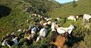 Δημιουργία συστημάτων κτηνοτροφίας