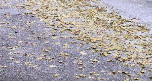 Mετατόπιση φορτίου γέμισε το δρόμο με βρώσιμες ελιές (Video)