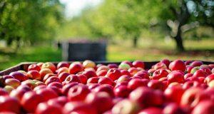 Θετικός ο αντίκτυπος των εμπορικών συμφωνιών στα γεωργικά προϊόντα