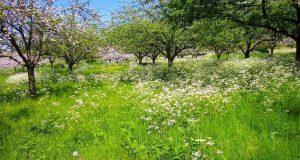 Οι παραδοσιακές μηλιές στα ελληνικά βουνά