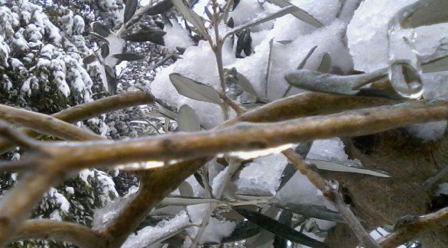 Ένωση Αγρινίου: Προστασία από τον παγετό – Όσα πρέπει να γνωρίζουν οι παραγωγοί