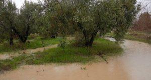 Δ. Αγρινίου: Δηλώσεις ζημιών των πληγεισών καλλιεργειών έως Παρασκευή
