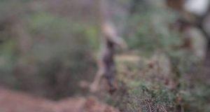 Φρίκη στον Αράκυνθο: Σκότωσαν λύκο και τον κρέμασαν σε δέντρο…