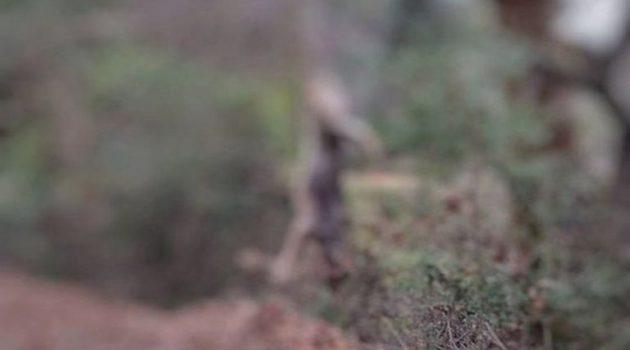 Φρίκη στον Αράκυνθο: Σκότωσαν λύκο και τον κρέμασαν σε δέντρο – Καταγγελία από τον «Αρκτούρο»