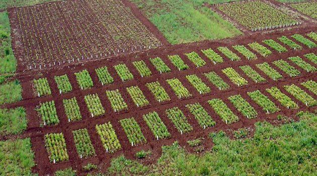 Η πολιτική προώθησης της γεωργίας τροφίμων