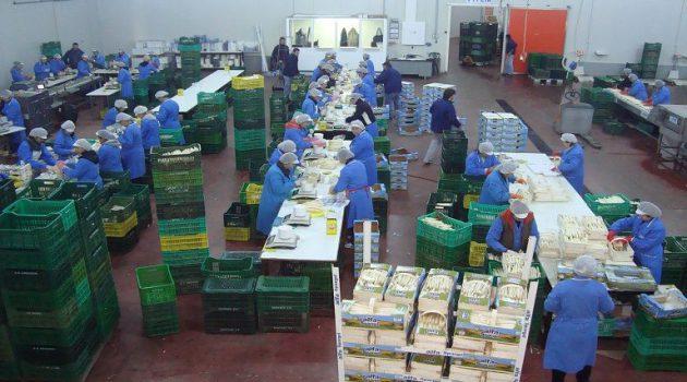 Α.Σ. Νεάπολης: Πρόσληψη εργατών στο Συσκευαστήριο σπαραγγιών