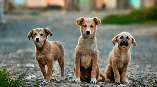 Μύτικας Αιτωλ/νίας: Ζούσε στο ίδιο σπίτι με 19 σκυλιά χωρίς κανόνες ευζωίας