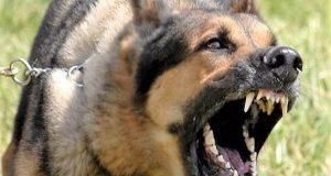 Τουρλίδα Μεσολογγίου: 40 δαγκώματα από το ίδιο σκυλί