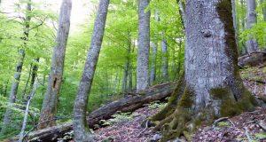 Διαβούλευση για τη νέα στρατηγική της Ε.Ε. για τα δάση
