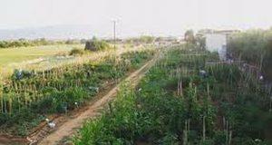 Δ. Αγρινίου: Ξεκινούν οι αιτήσεις για τον Δημοτικό Λαχανόκηπο