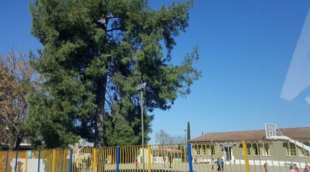 Δημοτικό Σχολείο Καλυβίων: Κλείνει μετά από εντοπισμό κρούσματος σε εκπαιδευτικό