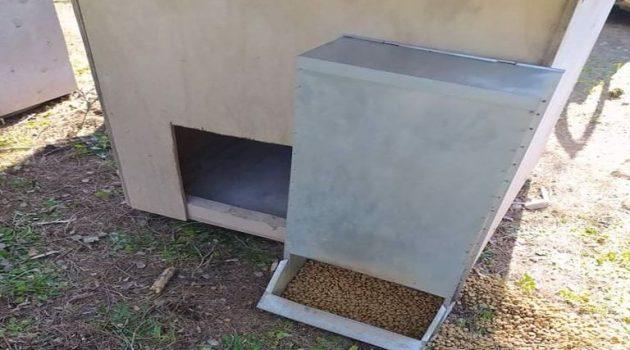 Μεσολόγγι: Ο Δήμος για την προστασίας των αδέσποτων ζώων από τις χαμηλές θερμοκρασίες (Photo)