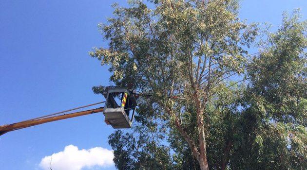 Πάτρα: Κλάδεμα ψηλών δέντρων στην Κωνσταντινουπόλεως από Φαβιέρου μέχρι Καρόλου