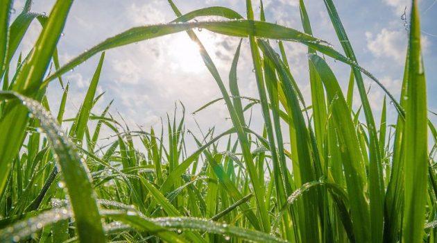 Μαζικά δεδομένα… και στη γεωργία