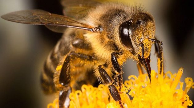 Μελισσοκομία: Ενίσχυση προμήθειας μεμονωμένων κινητών βάσεων