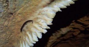 Λεπενού: Αναζήτηση νέων ειδών ζώων σε σπήλαιο (Photos)