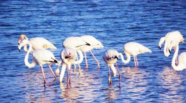 Εθνικό Πάρκο Υδρόβιων Πτηνών και Υδροβιότοπων στο Αιτωλικό;