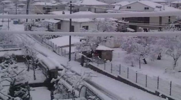 Κακοκαιρία «Μήδεια»: Χιονίζει στην Ορεινή Ναυπακτία (Photos – Video)