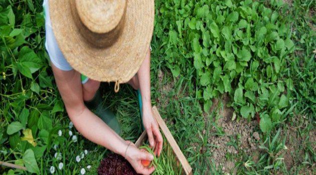 Σπ. Λιβανός: «Ιδιαίτερη τιμή στην Ελληνίδα αγρότισσα –Χρέος μας η στήριξη της γυναίκας 365 μέρες το χρόνο»