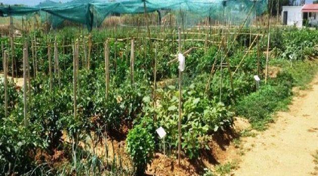 Αγρίνιο: Ο Δημοτικός Λαχανόκηπος αναπτύσσεται σε έναν ειδικά διαμορφωμένο χώρο