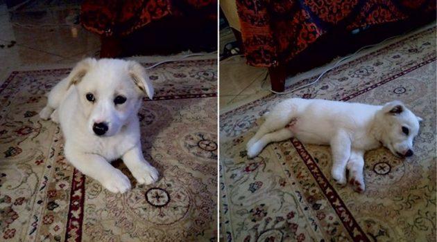 Αναζητείται ο ιδιοκτήτης σκυλίτσας που βρέθηκε στην Αμφιλοχία (Photo)