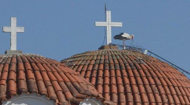 Παναιτώλιο: Ήρθε ο πρώτος πελαργός στο καμπαναριό της Αγίας Τριάδος (Photos)