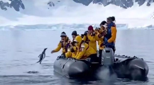 Εντυπωσιακό: Πιγκουίνος σώζεται από δολοφόνο φάλαινα πηδώντας σε βάρκα (Video)