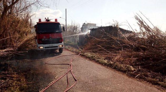 Κινδύνεψαν ζώα μετά από πυρκαγιά σε αποθήκη στον Πλάτανο Καλυβίων (Photos)