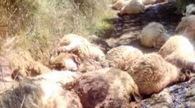 Δυτική Αχαΐα: Σύλληψη για ζωοκτονία και απειλή