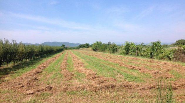 Tο 1/3 των τροφίμων το παράγουν οι μικροκαλλιεργητές