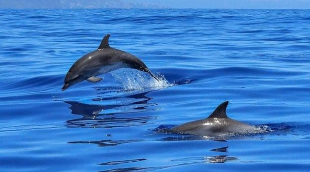 Λουτράκι: Σκότωσαν τρία δελφίνια σε περίοδο αναπαραγωγής (Photos)
