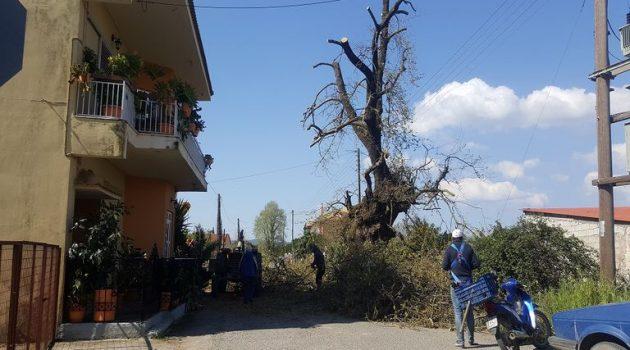 Καλύβια Αγρινίου: Εργασίες κλαδέματος δέντρων (Photos)