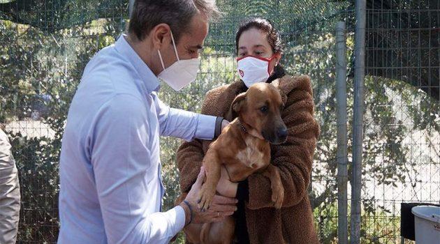 Παγκόσμια Ημέρα Αδέσποτων: Στο καταφύγιο ζώων της Ηλιούπολης ο Μητσοτάκης (Photos)