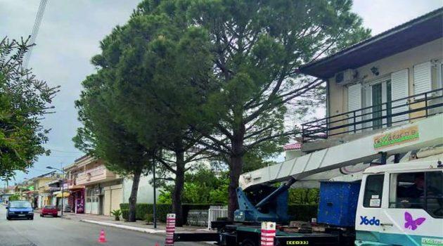 Κοινότητα Παναιτωλίου: Κλάδεμα δένδρων από το Δήμο Αγρινίου (Photos)