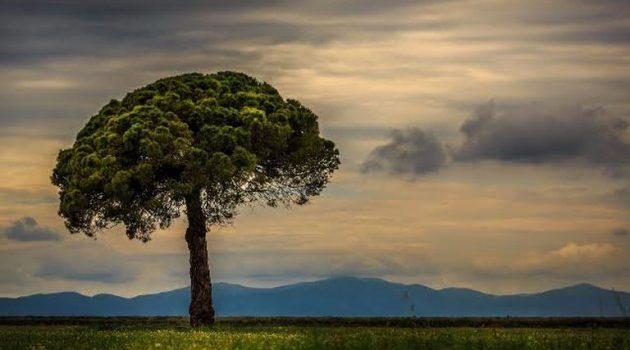 Το δέντρο και ο Θωμάς