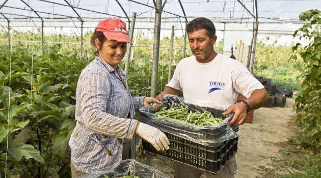 Τέλος επιτηδεύματος: Ποιοι αγρότες απαλλάσσονται – Τι ισχύει για τους παραγωγούς λαϊκών αγορών