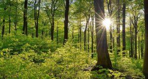Δάση: Πάνω από 79 εκατ. ευρώ για πρόληψη και αποκατάσταση…