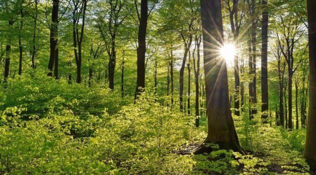 Δάση: Πάνω από 79 εκατ. ευρώ για πρόληψη και αποκατάσταση ζημιών
