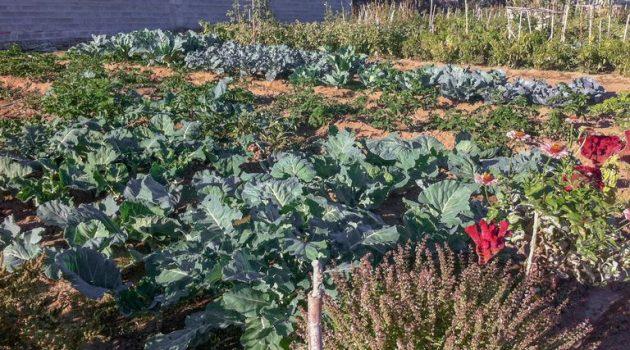 Δημοτικός Λαχανόκηπος Αγρινίου: Ξεκινούν οι ανοιξιάτικες καλλιέργειες (Photos)
