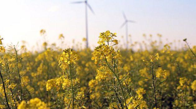 Ενεργειακές Καλλιέργειες