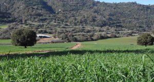 Επέκταση των ελέγχων της Κοινής Αγροτικής Πολιτικής