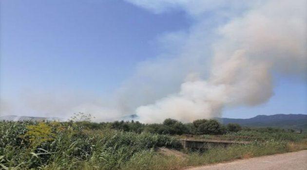 Μεσολόγγι: Πυρκαγιά σε αγροτική έκταση κοντά στο Τ.Ε.Ι.