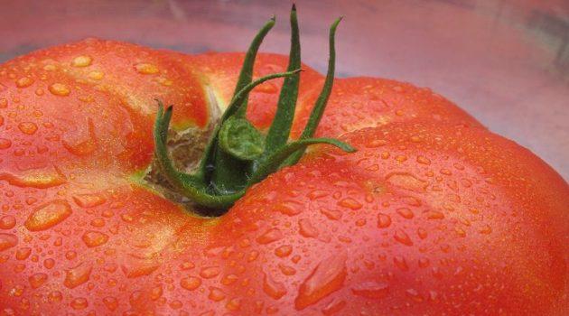 Πώς η Οξφόρδη «ελέγχει» την ωρίμανση της ντομάτας