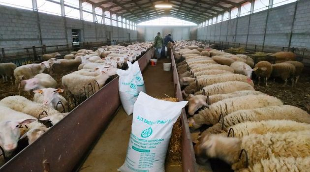 Ένωση Αγρινίου – Αιγοπρόβατα: Συμβουλές για τη σωστή διατροφή τους