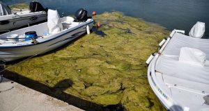 Πρέβεζα: «Πράσινη παλίρροια» από φύκια κατέκλυσε το λιμάνι